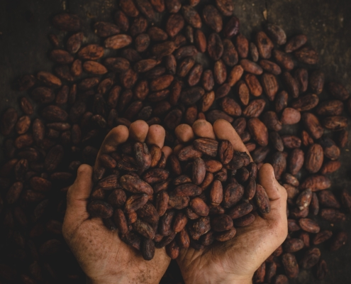cacao and terroir